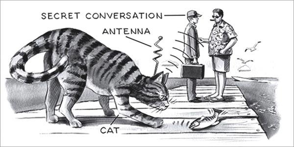 Mèo gián điệp