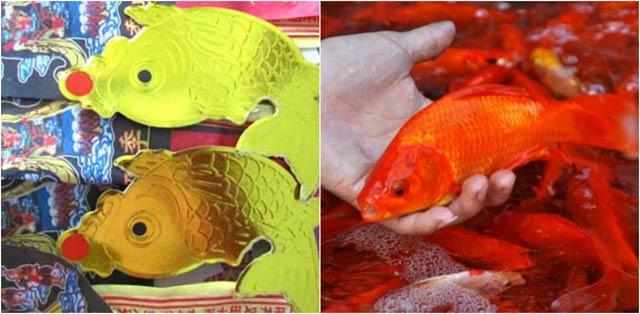 Cá chép thật và cá chép giấy