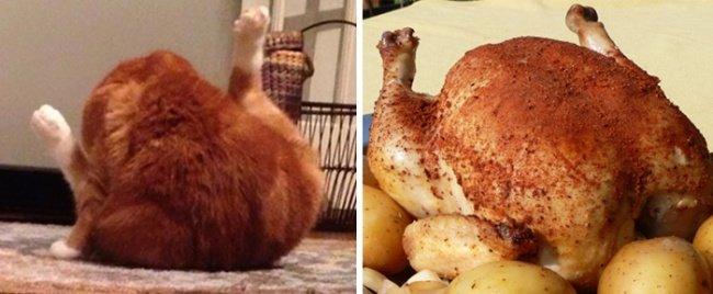 Con mèo và con gà nướng