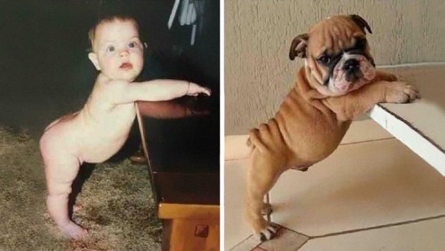 Em bé và con chó