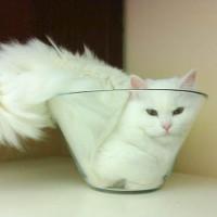 """""""Mèo là chất lỏng"""" và những nghiên cứu """"không nhịn được cười"""" trong giải Ig Nobel 2017"""