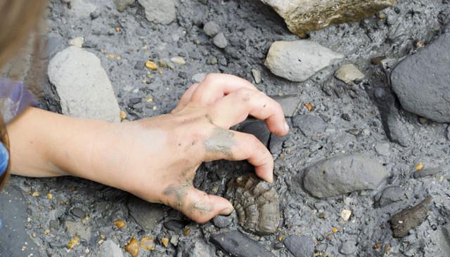 Ấn Độ lần đầu tiên phát hiện hoá thạch loài thằn lằn cá
