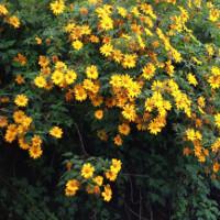 Những mùa hoa đẹp nhất, hấp dẫn nhất ở Việt Nam nên check in một lần trong đời