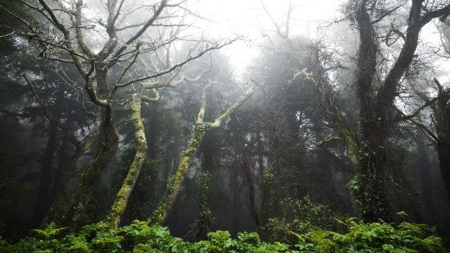 Bộ ảnh nền thiên nhiên chất lượng 4k tuyệt đẹp cho máy tính 26