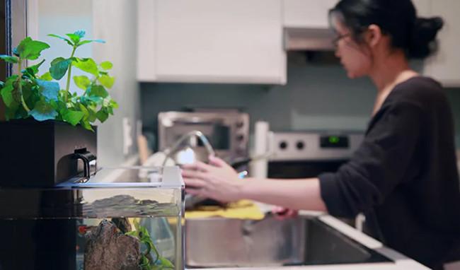 Tự làm sạch bể cá nhờ mối quan hệ cộng sinh giữa cá và cây trồng trong bể