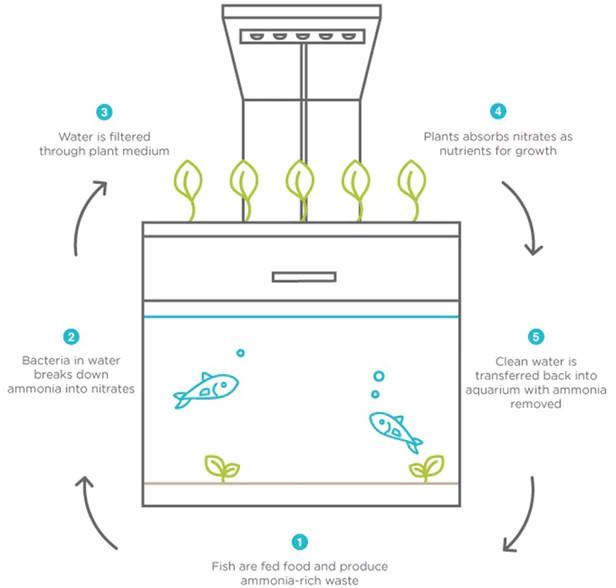 Quá trình sinh sống của cá