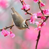 Thơ chúc Tết, những bài thơ hay về mùa xuân để chúc mừng năm mới 2018