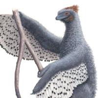 Loài khủng long có kích cỡ gà tây mới tìm thấy ở Úc