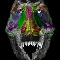 Xuất bản kế hoạch in hộp sọ 3D khủng long 200 triệu năm tuổi