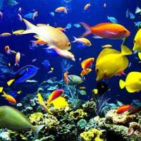 Tiếng ồn của những con tàu ảnh hưởng đến khả năng giao tiếp của các sinh vật biển