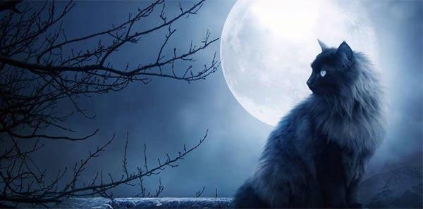 Full Moon Kitty
