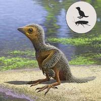 Tìm thấy hóa thạch loài chim bé nhỏ 127 triệu năm tuổi thời tiền sử