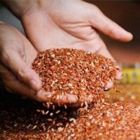 Ấn Độ tìm thấy đặc tính chống ung thư trong 3 giống gạo