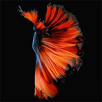 Cách cài hình nền con cá đang bơi cho iPhone